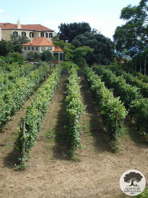 008-vineyard-and-main-house
